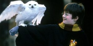 hp-and-owl